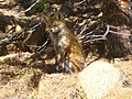 Fox On Empty Lot in Colorado - panoramio.jpg