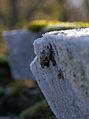 Frost (2040587152).jpg