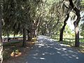 GA Savannah Bethesda Home road02.jpg