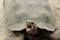 Galapago Tortoise.jpg