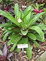 Gardenology.org-IMG 2165 rbgs11jan.jpg