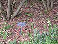 Gardenology.org-IMG 5043 hunt0904.jpg