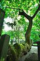 Gartenfriedhof Hannover 2.jpg