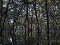 Gasworks Creek, Sandgate, near Brisbane, Australia - panoramio.jpg