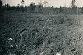Gefallene Baltikum 1943-1 by-RaBoe.jpg