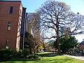 Georgia Institute of Technology - panoramio - Idawriter (3).jpg