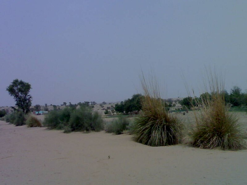 File:Gharsana tehsil NATURAL VEGETATION.jpg