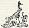 Giraffe - Thevet André - 1556.jpg