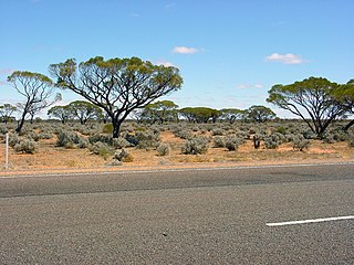 Town in South Australia