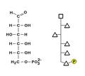Glicose6P-Estrutura Wiki .png