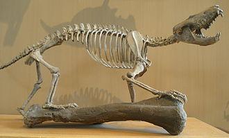 Gobiconodon - Gobiconodon ostromi skeleton