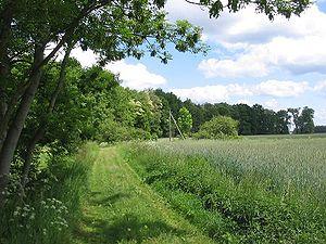 Woodland edge - Woodland edge in Brandenburg