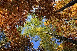 Grünfelder Park bei Waldenburg in Sachsen ...IMG 0567WI.jpg