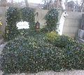 Grave Schiske Karl.jpg