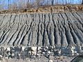 Gray Shale, Kansas City KS USA.jpg