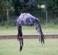Great Grey Owl in flight 3 (6021927035).jpg