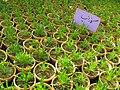 Greenhouses in mahallat 10.jpg