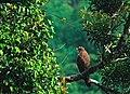 Greeny Bird 4.jpg