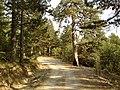 Grevena Road 04.jpg
