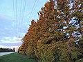 Grey County Sunset (33875871163).jpg
