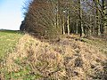 Grims ditch ancient earthwork. - geograph.org.uk - 119603.jpg