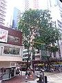 HK Bus 101 view 灣仔 Wan Chai 軒尼斯道 Hennessy Road August 2018 SSG 05.jpg