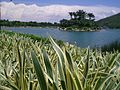 HK Disneyland Inspiration Lake plant 迪欣湖 湖心島 small island.JPG