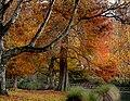 Hagley Park New Zealand. (9376959846).jpg