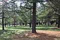 Haig Park, Braddon.JPG