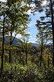 Hainfeld Kirchberg Herbstwald 01.JPG