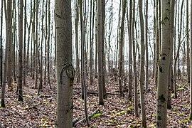 Haltern am See, Silbersee III, Bäume -- 2021 -- 4524.jpg