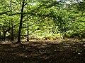 Hambach forest 32.jpg