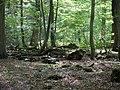 Hambach forest 45.jpg