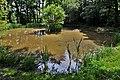 Hambledon- Duck pond (geograph 5807225).jpg
