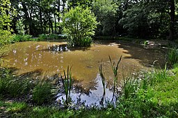 Hambledon- Duck pond (geograph 5807225)