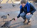 Hand feeding a Nene goose at Wildfowl & Wetlands Trust (WWT) - Slimbridge, Gloucestershire.jpg