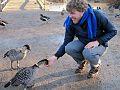 Hand feeding a Nene goose at Wildfowl & Wetlands Trust (WWT) - Slimbridge, Gloucestershire.jpg