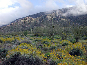 Harquahala Mountains - Harquahala Mountains viewed from north side following an unusually wet spring.  Bright yellow shrubs are Brittle Bush, (Encelia farinosa).