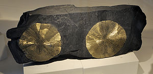 Sparta, Illinois -  Pyrite discs in coal, from an old Sparta mine. Harvard Museum of Natural History