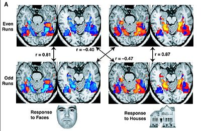 fMRI images from a study showing parts of the brain lighting up on seeing houses and other parts on seeing faces