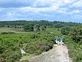 Heathland path in the New Forest Hampshire - geograph.org.uk - 212811.jpg