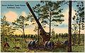 Heavy artillery, Camp Forest, Tullahoma, Tenn (69997).jpg