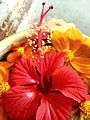 Herb flower.jpg