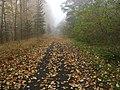 Herbst Weg - panoramio.jpg