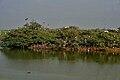 Heronry at Uppalpadu, AP W IMG 2789.jpg