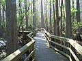 Highland Hammocks SP Swamp Trail03.jpg