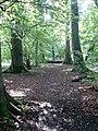 Hillside Plantation - geograph.org.uk - 772093.jpg