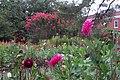 Hillwood Gardens in July (19613981060).jpg