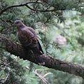 Himalayanbird.jpg