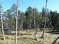 Hinterzartener Moor 1130115.jpg
